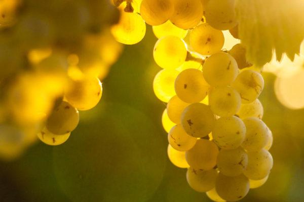 Reg. 4 – Trauben, Wein und Trester