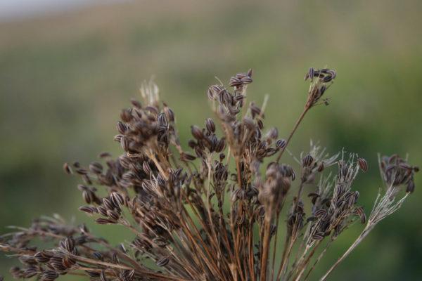 Reg. 6 – Kräuter und Gewürze